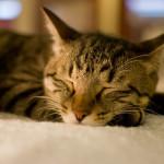 睡眠薬の副作用-俺の場合を語る-