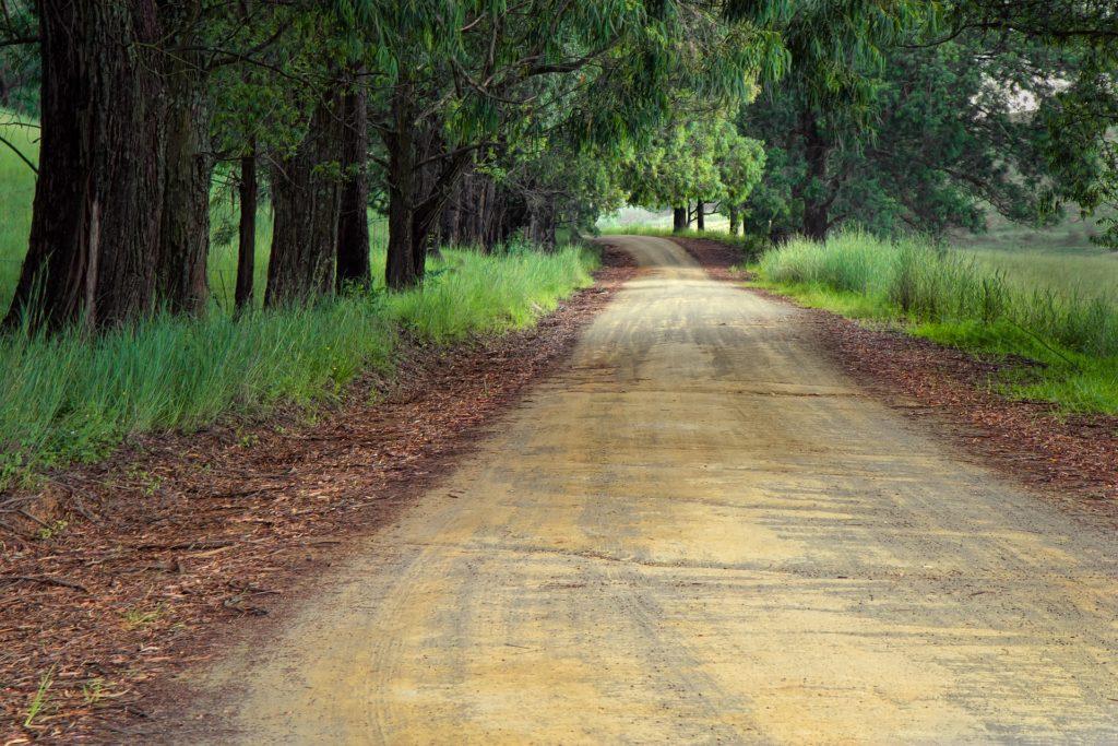 長い道路、木々