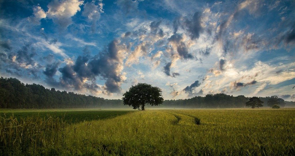 一本の木と草原